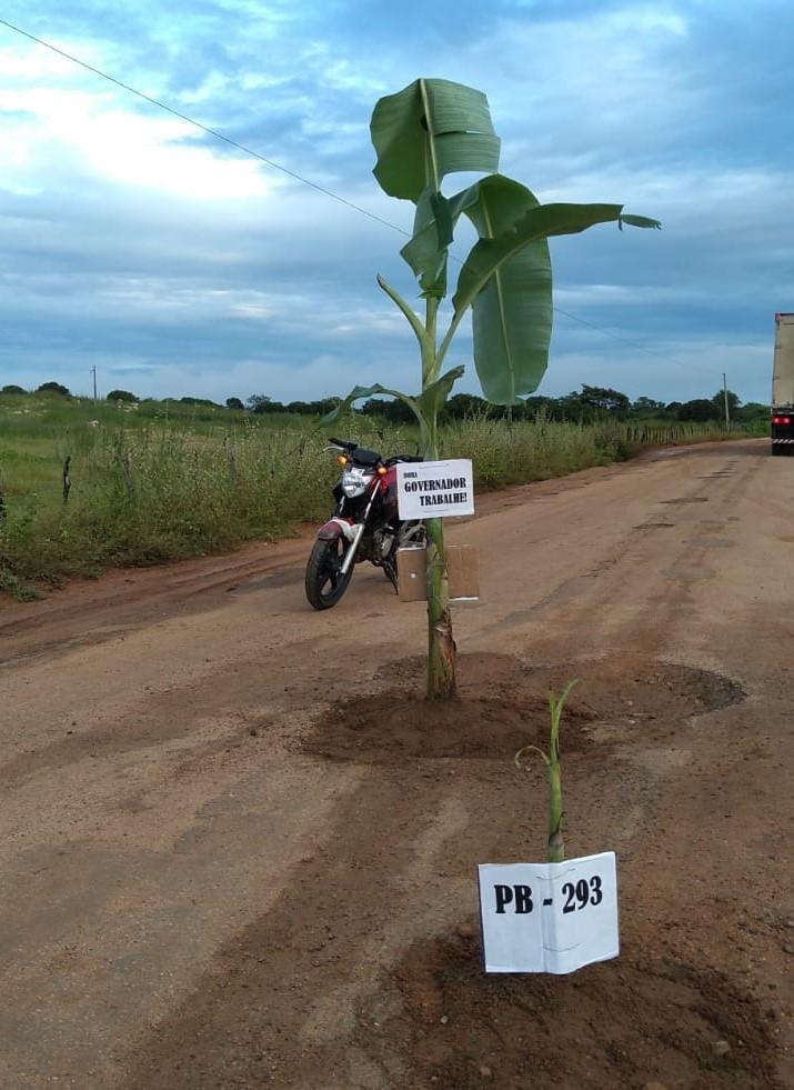 População planta pés de banana nos buracos das estradas de Ricardo ...